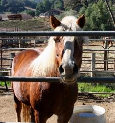 179 Wild Horse Valley Drive, Novato, CA, 94947 United States