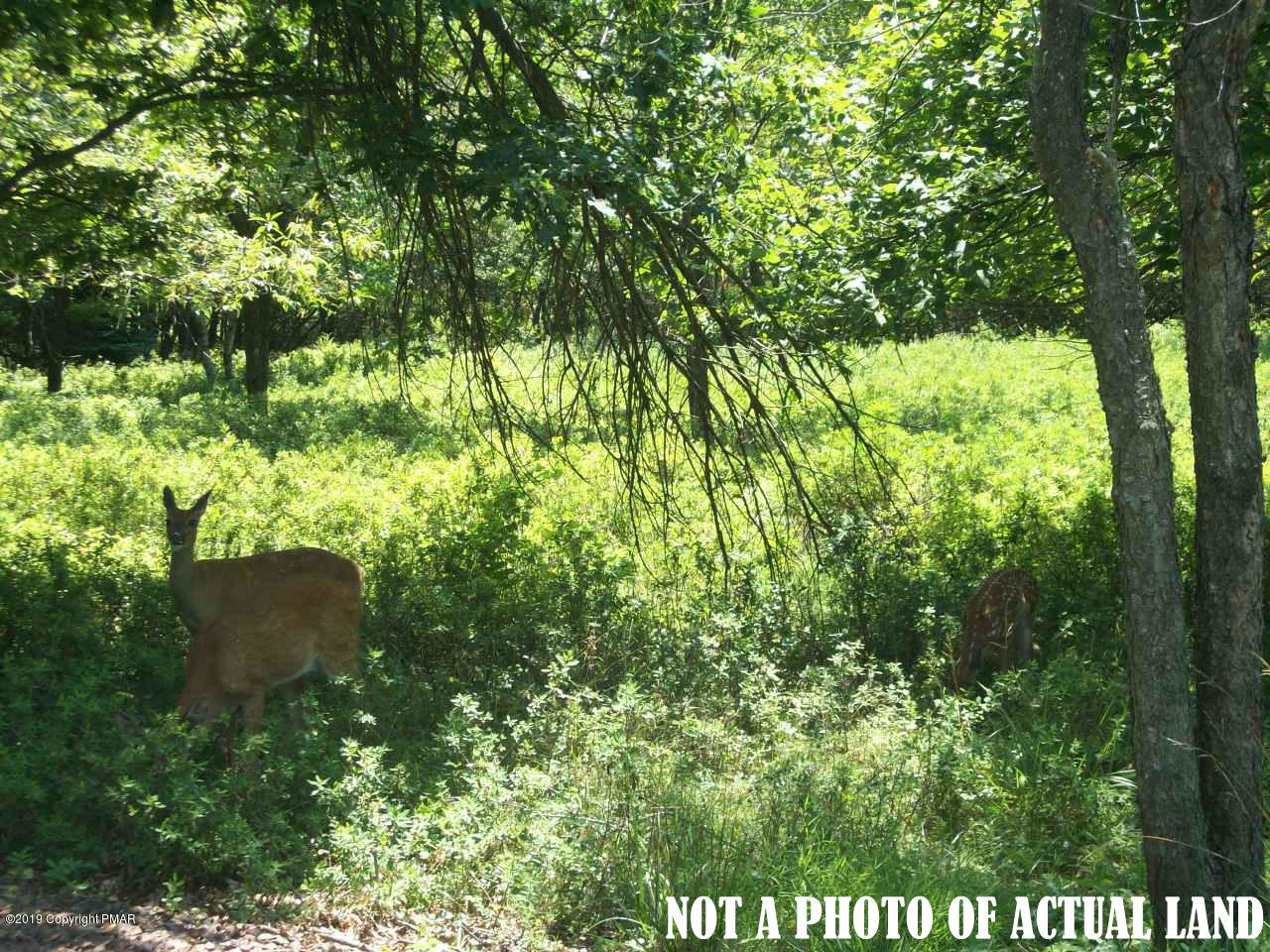 1134A Lackawanna & Crazy Horse Trail, Albrightsville, PA, 18210 United States