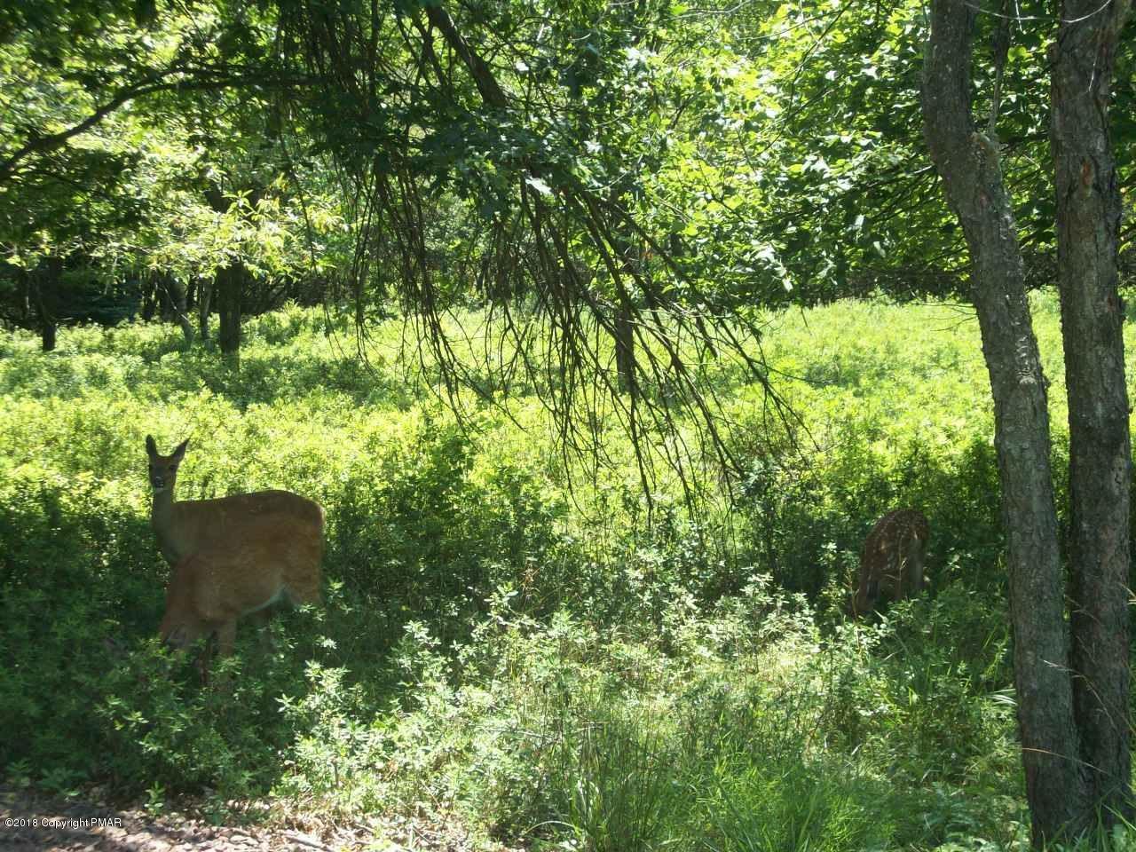 PENDING!!!! 8 Moccasin Trl Trail, Pocono Lake, PA, 18347 United States